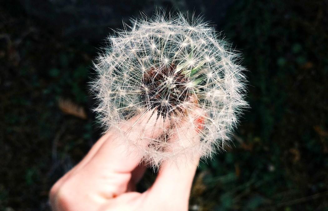 El Secreto para aumentar un 200% tu Concentración, Creatividad y Energía Doer